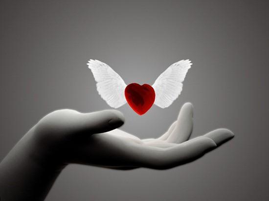 immagine cuore con ali
